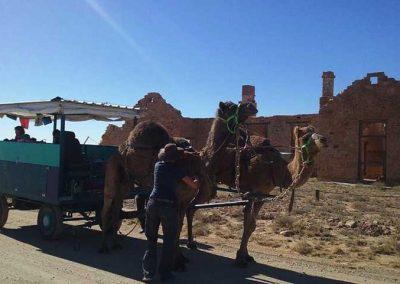 Camel cart seen passing through Farina