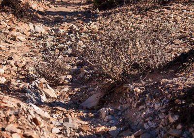 dry-creekline